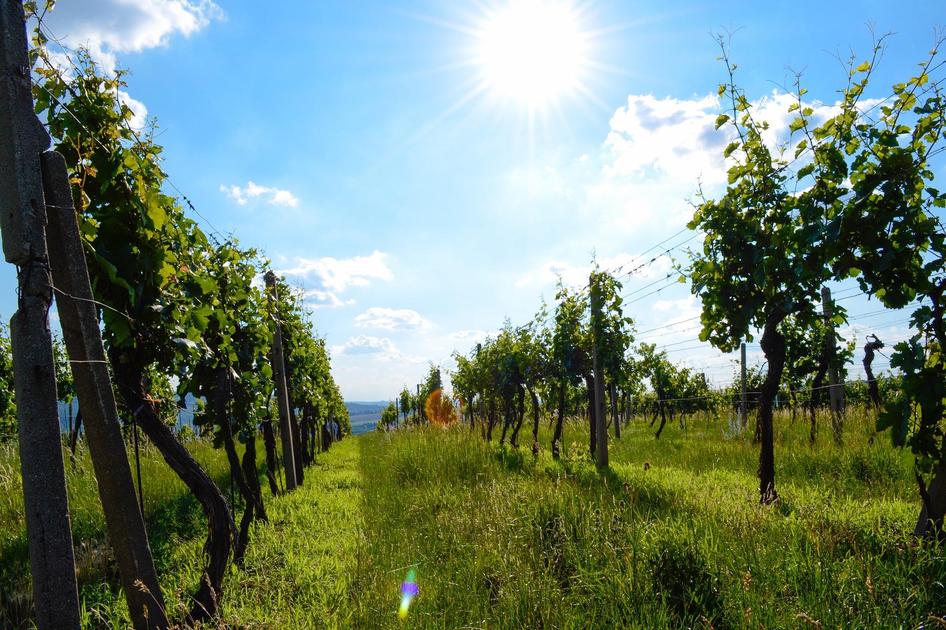 Vinařské obce na Moravě mají dlouhou tradici
