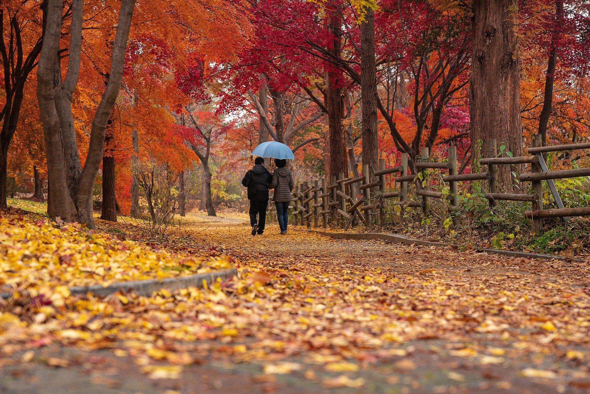 Choďte co nejvíce na procházky, pomůžete svému zdraví, a to i tomu psychickému