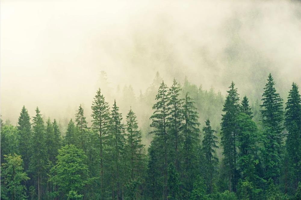 Lesy jsou tu pro nás, ale kdo je tu pro lesy?